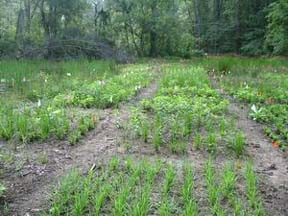 Biodiversity plots in July 2005