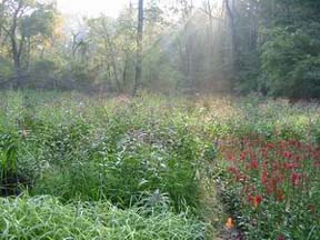 Biodiversity plots Sept 2005.JPG