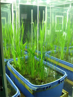 Species growing in growth chamber