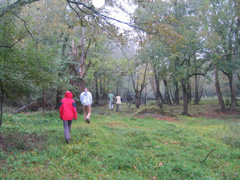 Students on field trip in bottomland hardwood forest